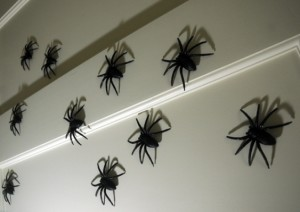 creepy-spiders-just-the-ticket