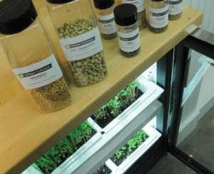 cultivate-an-indoor-herb-garden